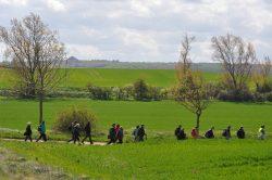 Kulturlandschaftselemente der Agrarflur, am Horizont die Kalihalde Johannashall, Foto: John Palatini
