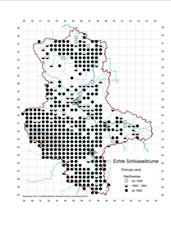 Rasterkarte Verbreitung der Echten Schlüsselblume, Auszug aus der Datenbank Blütenpflanzen, Teil Sachsen-Anhalt, des Landesamtes für Umweltschutz. Veröffentlichung mit freundlicher Genehmigung.