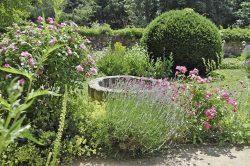 Brunnenstelle und  Symbolpflanzen im Kräutergarten. Foto: Kulturstiftung Sachsen-Anhalt