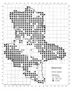 Rasterkarte des Heidekrauts. Auszug aus der Datenbank Blütenpflanzen, Teil Sachsen-Anhalt. Mit freundlicher Genehmigung des Landesamtes für Umweltschutz Sachsen-Anhalt.