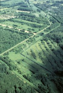 Im Drömling verläuft das Grüne Band durch die Kernzone des Naturparks,  die der natürlichen Sukzession überlassen bleibt. Foto: Klaus Leidorf