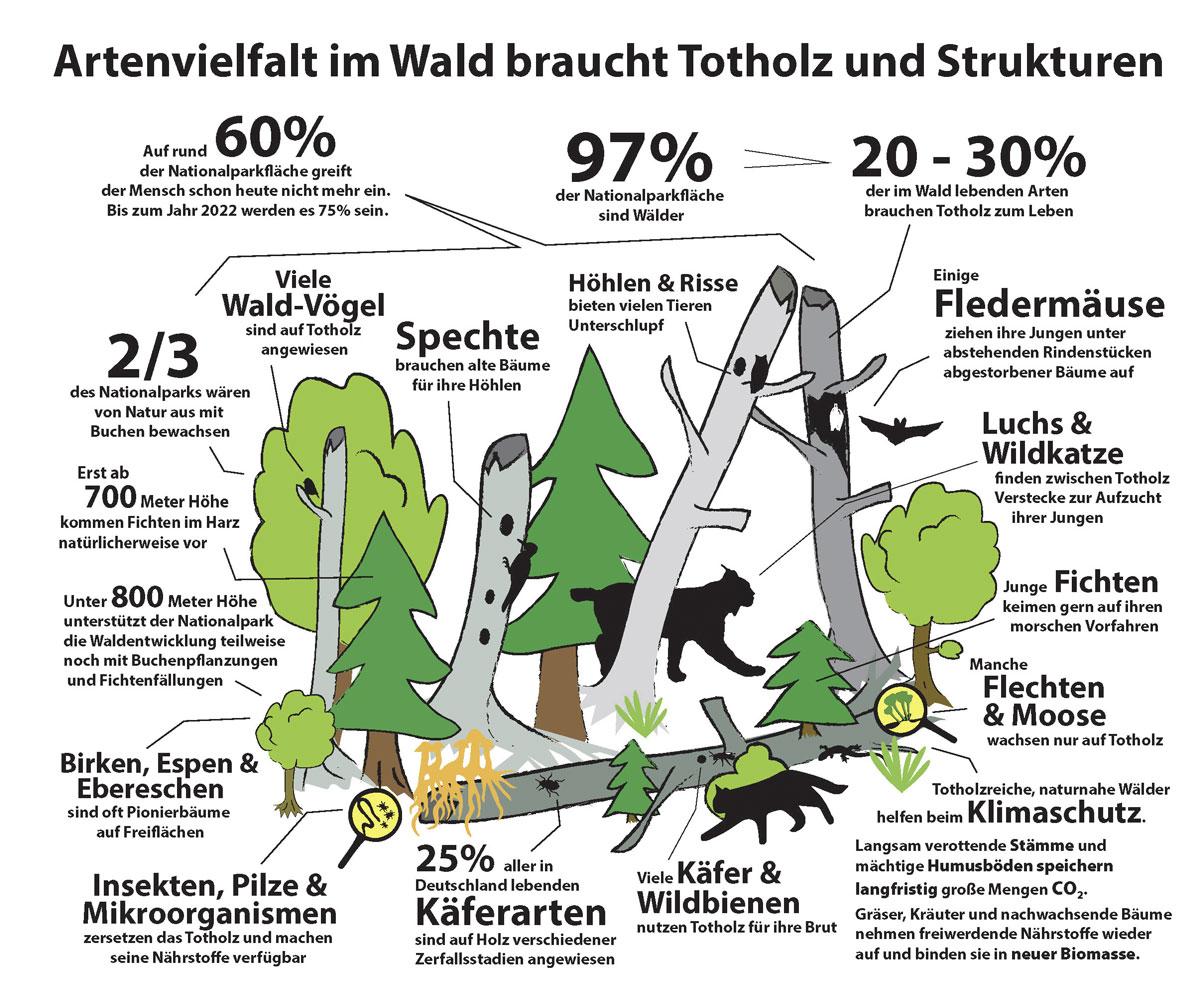 Wert von Totholz und Strukturvielfalt; Grafik: Mandy Bantle