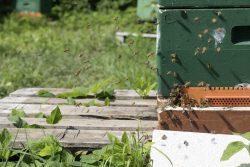 Bienenvolk des Michaelsteiner Imkers. Foto: Kulturstiftung Sachsen-Anhalt