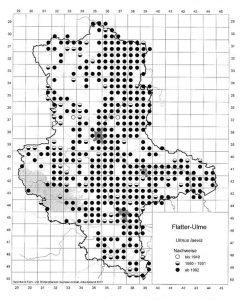 Rasterkarte der Flatter-Ulme. Auszug aus der Datenbank Blütenpflanzen, Teil Sachsen-Anhalt. Mit freundlicher Genehmigung des Landesamtes für Umweltschutz Sachsen-Anhalt.