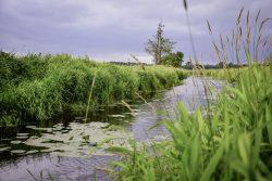 Drömling - Land der 1.000 Gräben - Feuchtgebiete ohne Ende. Foto: Sabrina Beyer