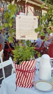 """Eine Rose """"Home & Garden"""" als Abschiedsgeschenk der Niegripper Heimatfreunde an Frau Schwitters für 27 Jahre Konsumleitung und Dorfgemeinschaftsbeziehungspflege. Foto: Nicole Schimanski"""