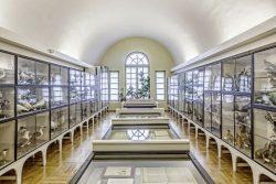 Blick in die Vogelsammlung. Archiv Naumann-Museum